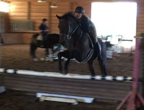 Boston: 8 y/o, Thoroughbred, Gelding – $7,500