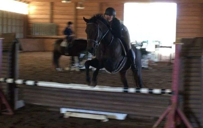 Bill Thomas Performance Horses | The Best Horses for Sale in