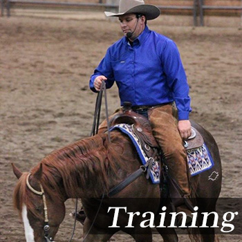 Horse Training Service Michigan